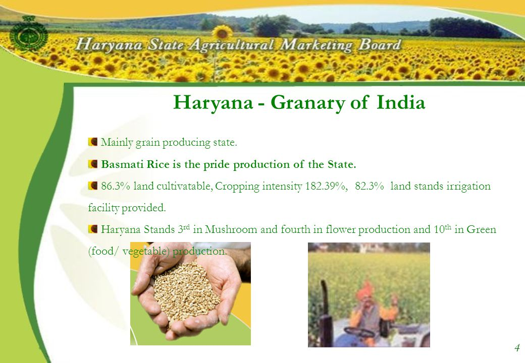 About Us Marketing Board was constituted in August, 1969 with an aim to create a strong and efficient marketing infrastructure by setting up modern markets for marketing Grain and Greens.