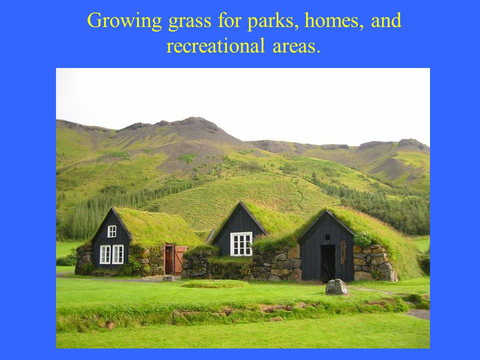 Growing grass for parks, homes, and recreational areas.