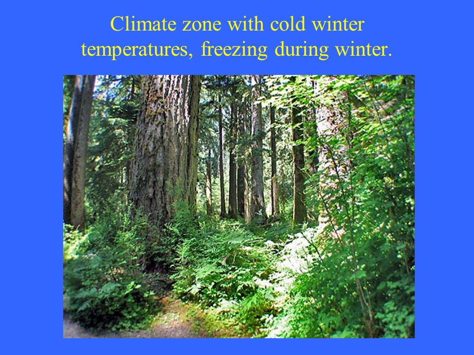 Climate zone with cold winter temperatures, freezing during winter.