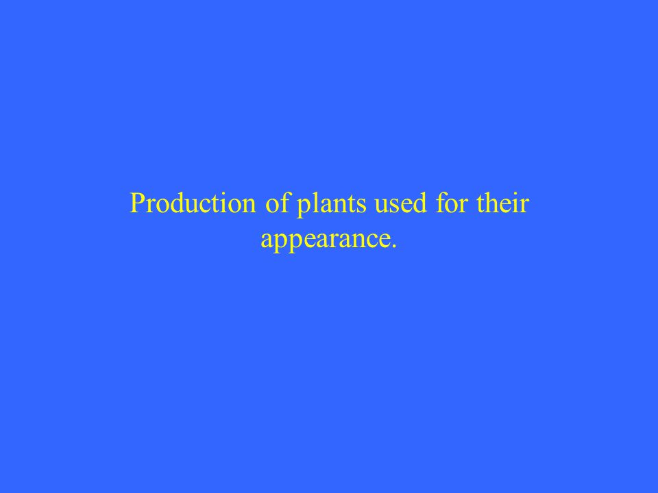 Production of plants used for their appearance.