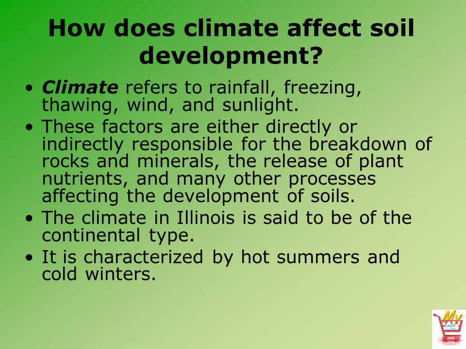 How does climate affect soil development? Climate refers to rainfall, freezing, thawing, wind, and sunlight. These factors are either directly or indi