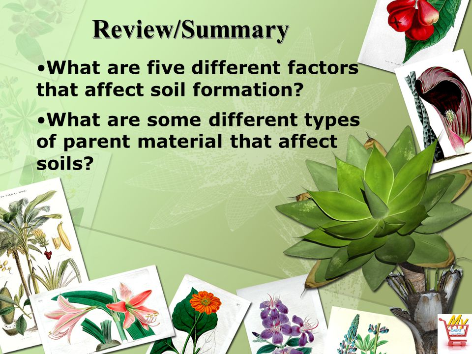 Review/Summary What are five different factors that affect soil formation? What are some different types of parent material that affect soils?