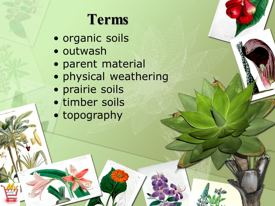 Terms organic soils outwash parent material physical weathering prairie soils timber soils topography