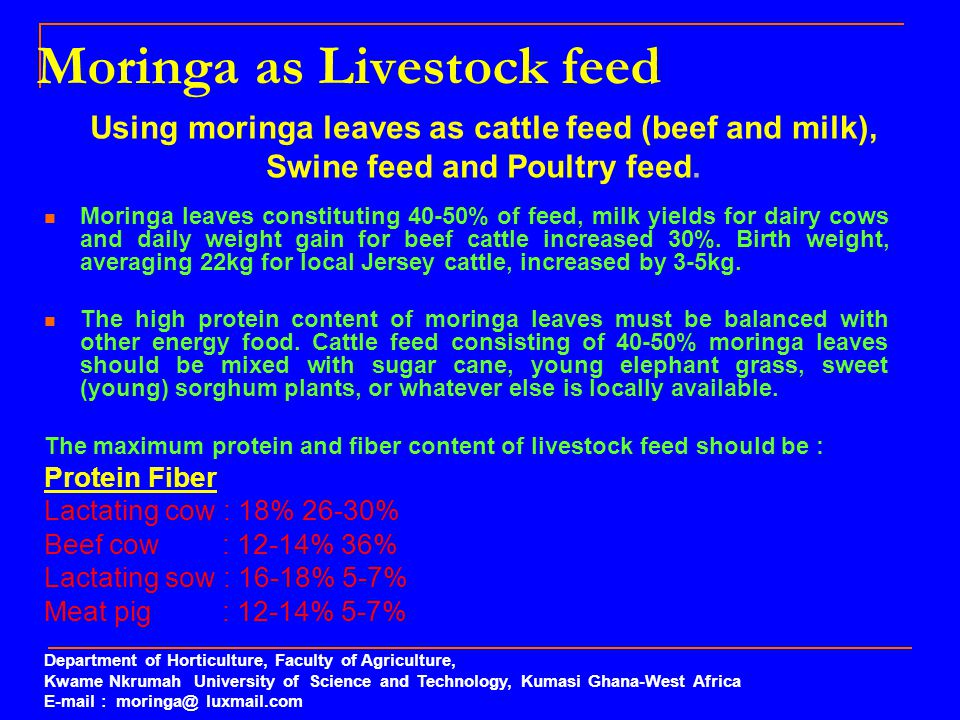 Moringa as Livestock feed Moringa leaves constituting 40-50% of feed, milk yields for dairy cows and daily weight gain for beef cattle increased 30%.