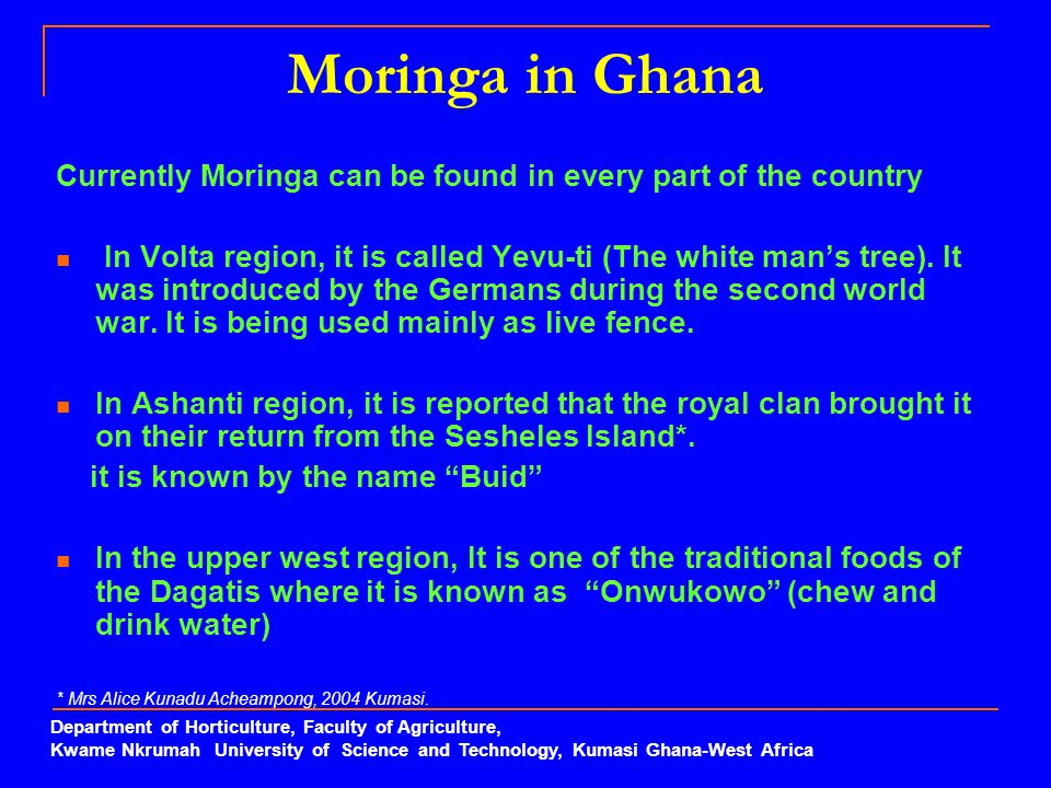 Moringa in Ghana Currently Moringa can be found in every part of the country In Volta region, it is called Yevu-ti (The white man's tree). It was intr