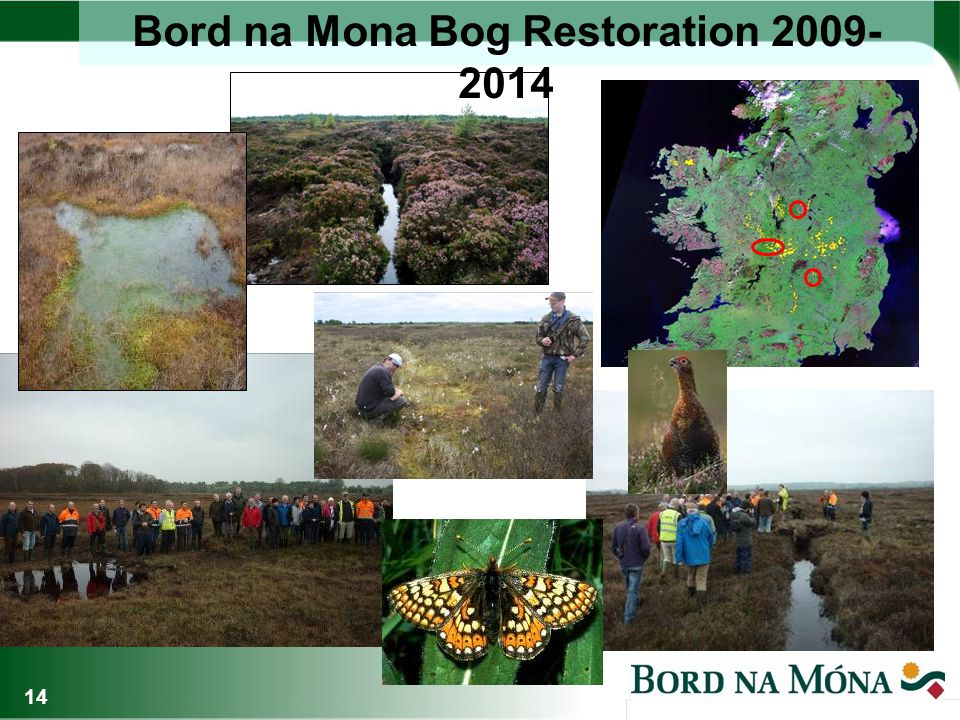 Carbon Measurement Rehabilitated Mayo bogs: carbon sink Reed-beds: carbon sink.