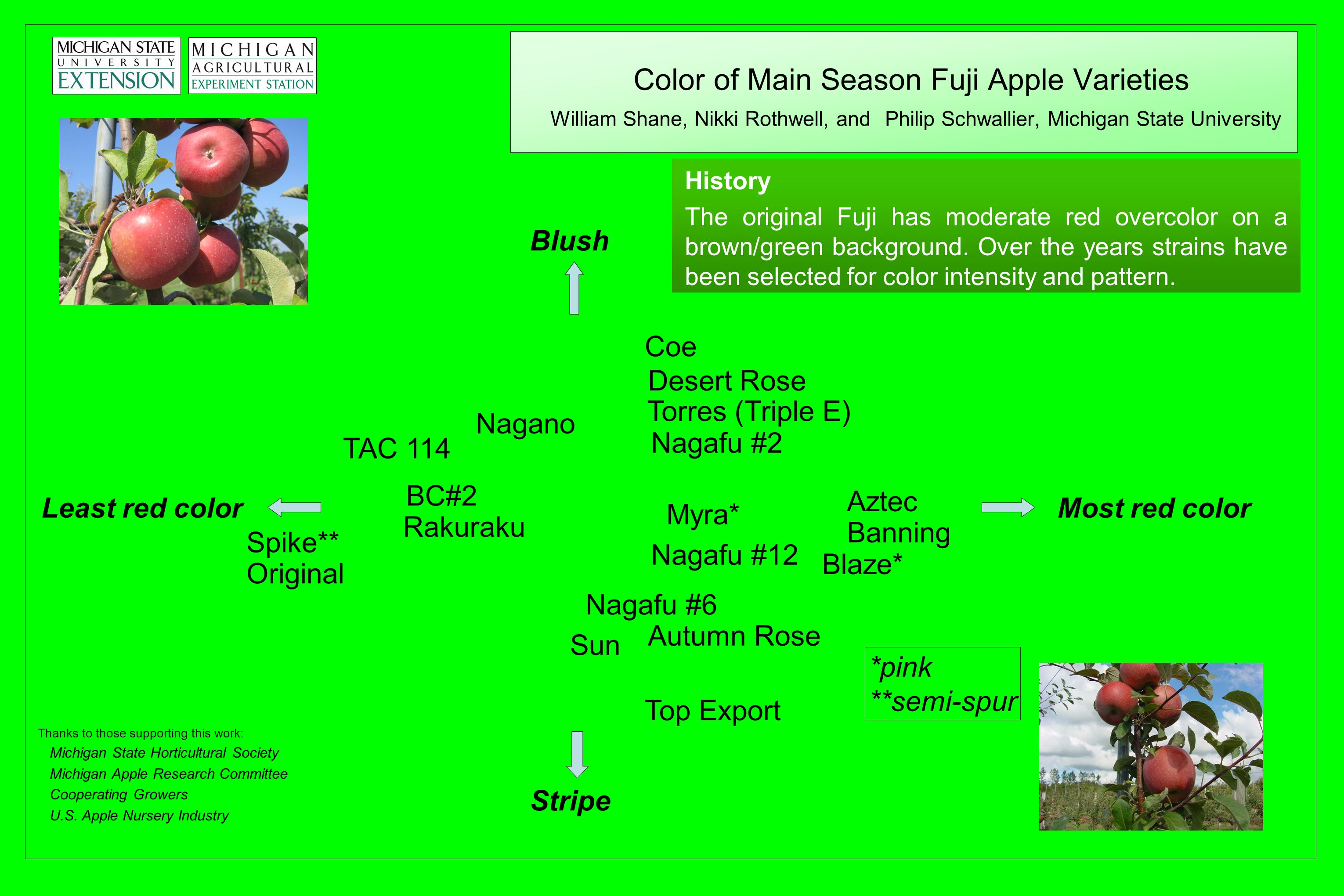 Color of Main Season Fuji Apple Varieties William Shane, Nikki Rothwell, and Philip Schwallier, Michigan State University History The original Fuji has moderate red overcolor on a brown/green background.