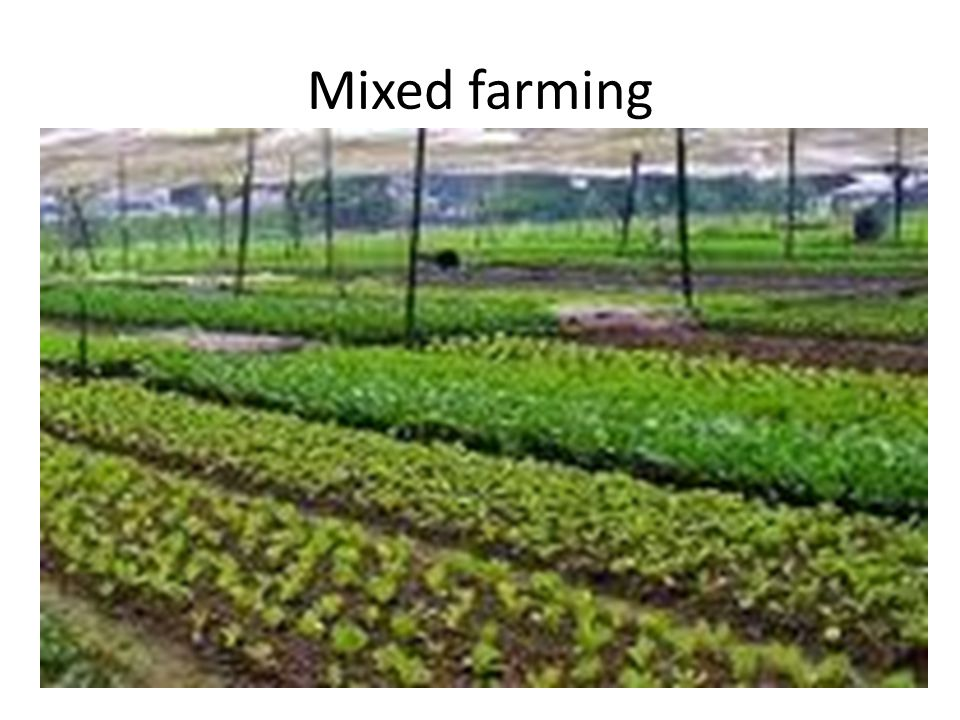 Mixed farming