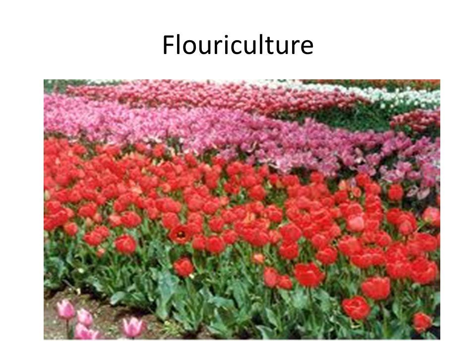 Flouriculture