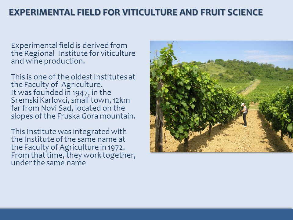 Experimental field is derived from the Regional Institute for viticulture and wine production. This is one of the oldest Institutes at the Faculty of