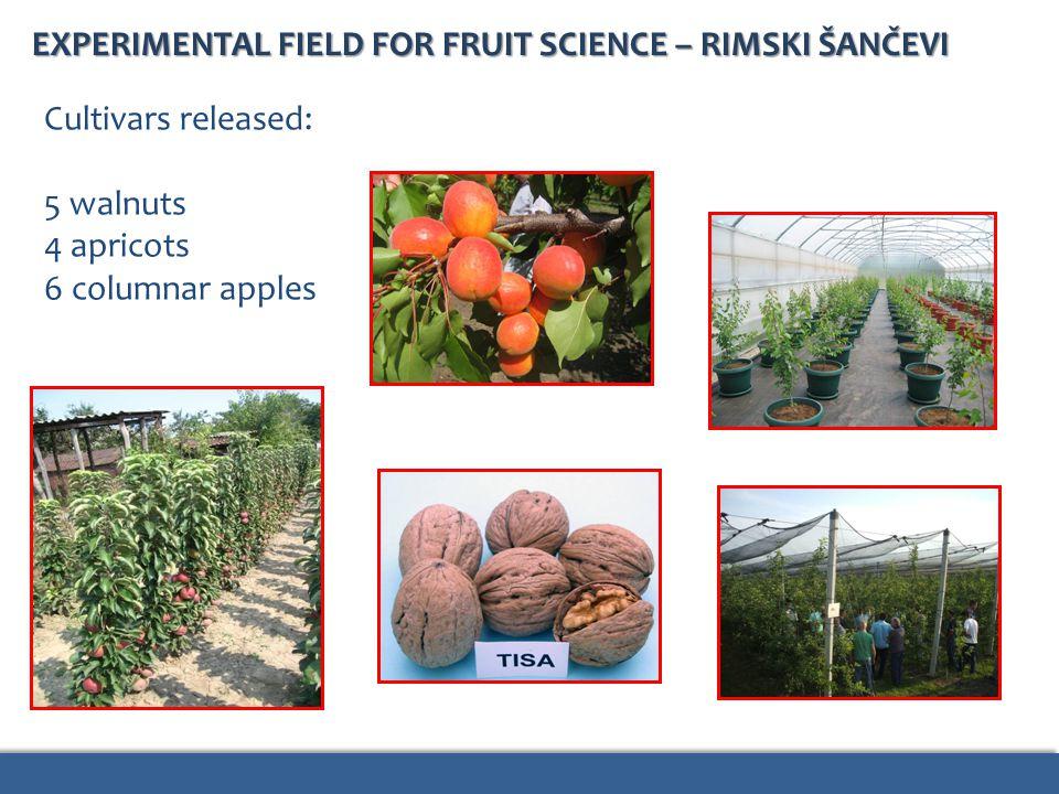 EXPERIMENTAL FIELD FOR FRUIT SCIENCE – RIMSKI ŠANČEVI Cultivars released: 5 walnuts 4 apricots 6 columnar apples