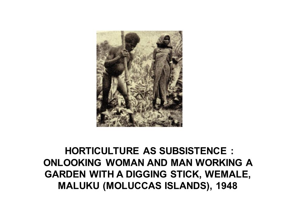HORTICULTURE AS SUBSISTENCE : ONLOOKING WOMAN AND MAN WORKING A GARDEN WITH A DIGGING STICK, WEMALE, MALUKU (MOLUCCAS ISLANDS), 1948