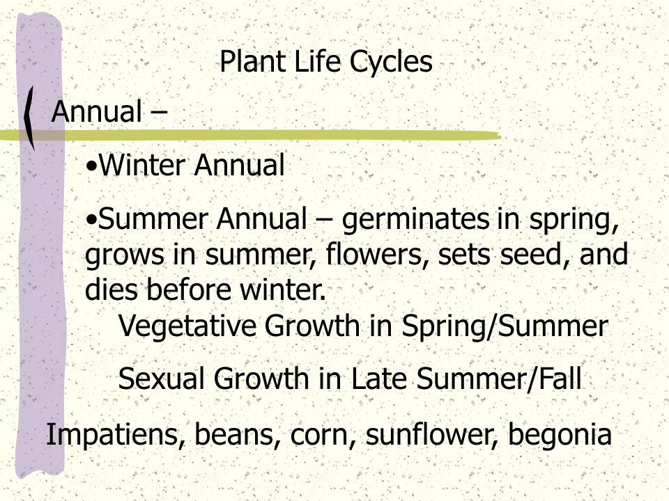 Plant Life Cycles Annual – Winter Annual Summer Annual – germinates in spring, grows in summer, flowers, sets seed, and dies before winter.