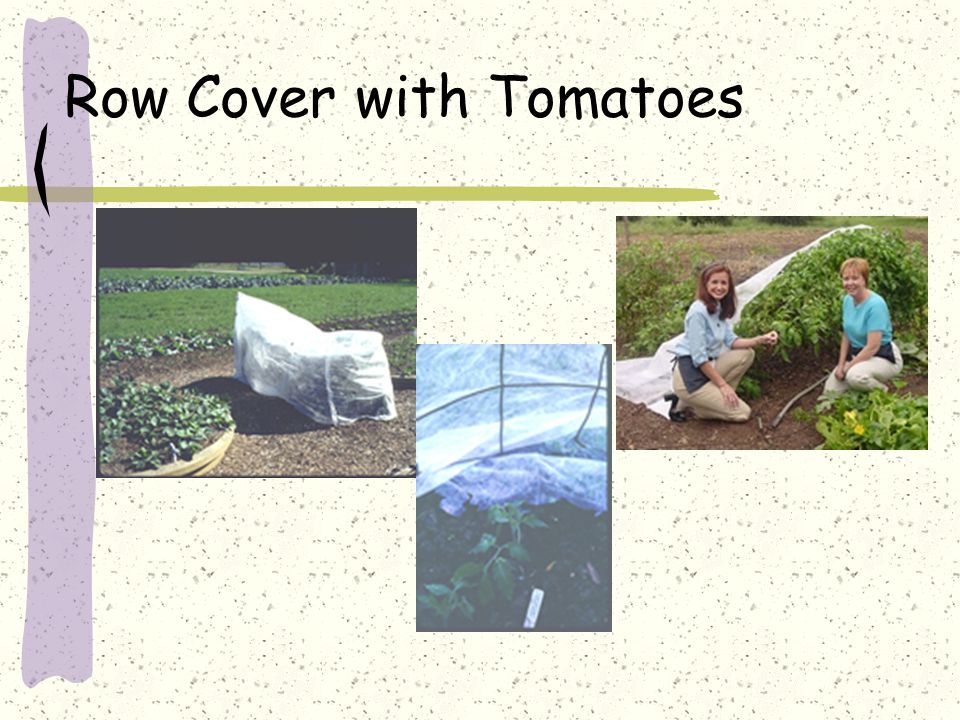 Row Cover with Tomatoes