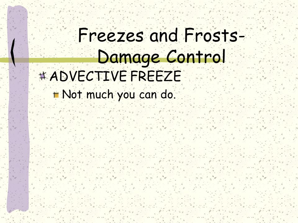 ADVECTIVE FREEZE Not much you can do. Freezes and Frosts- Damage Control