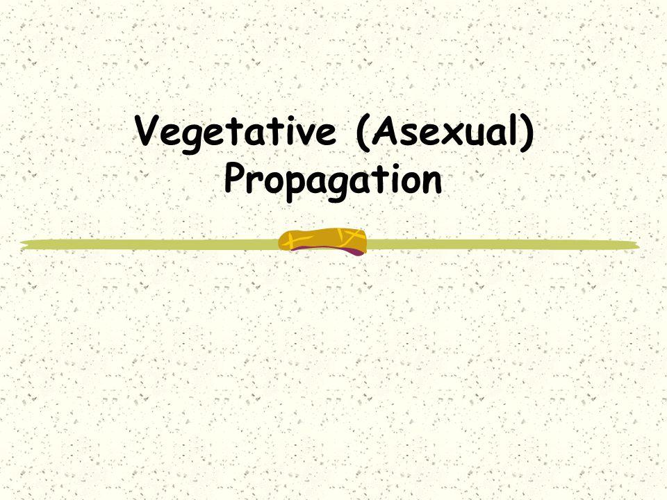 Vegetative (Asexual) Propagation