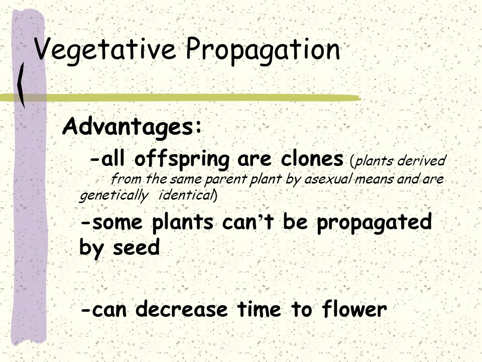 Vegetative Propagation Advantages: -all offspring are clones (plants derived from the same parent plant by asexual means and are genetically identical) -some plants can ' t be propagated by seed -can decrease time to flower