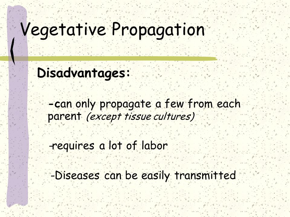 Vegetative Propagation Disadvantages: -can only propagate a few from each parent (except tissue cultures) -requires a lot of labor -Diseases can be ea