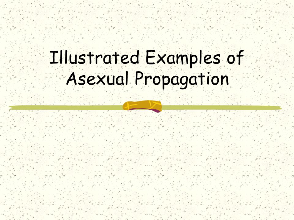 Illustrated Examples of Asexual Propagation