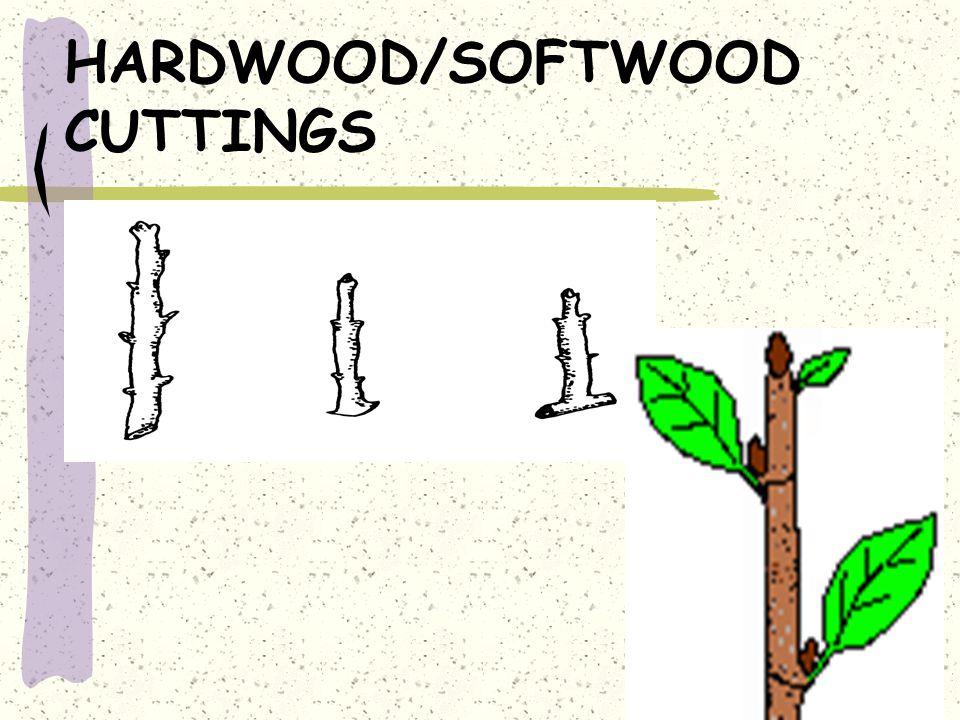 HARDWOOD/SOFTWOOD CUTTINGS