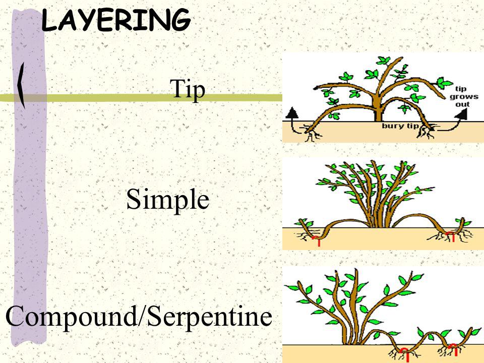 LAYERING Tip Simple Compound/Serpentine