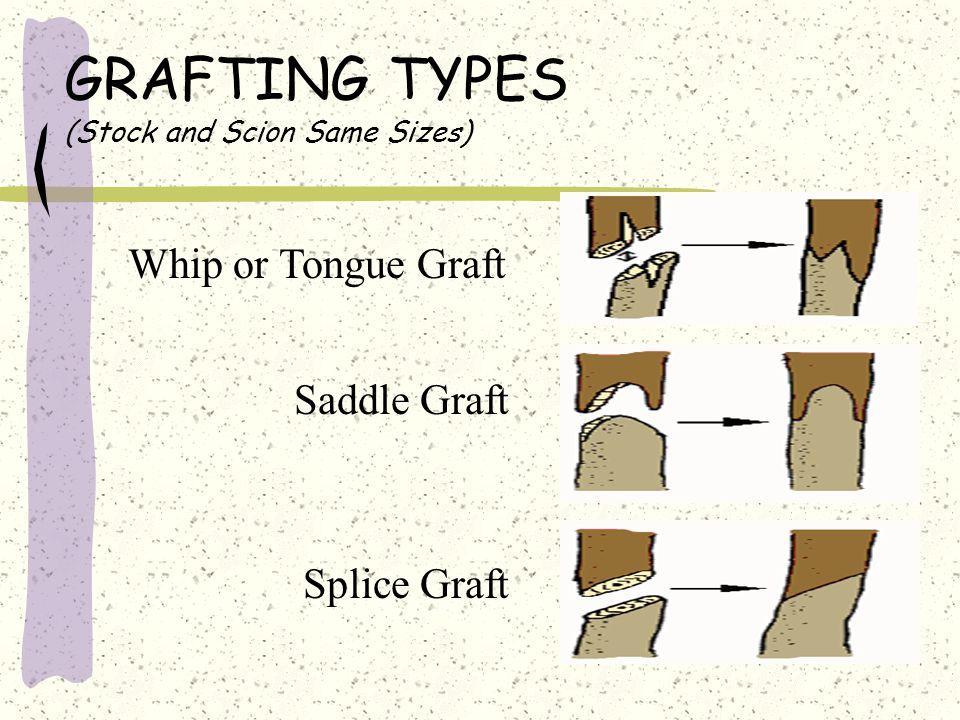 GRAFTING TYPES (Stock and Scion Same Sizes) Whip or Tongue Graft Saddle Graft Splice Graft