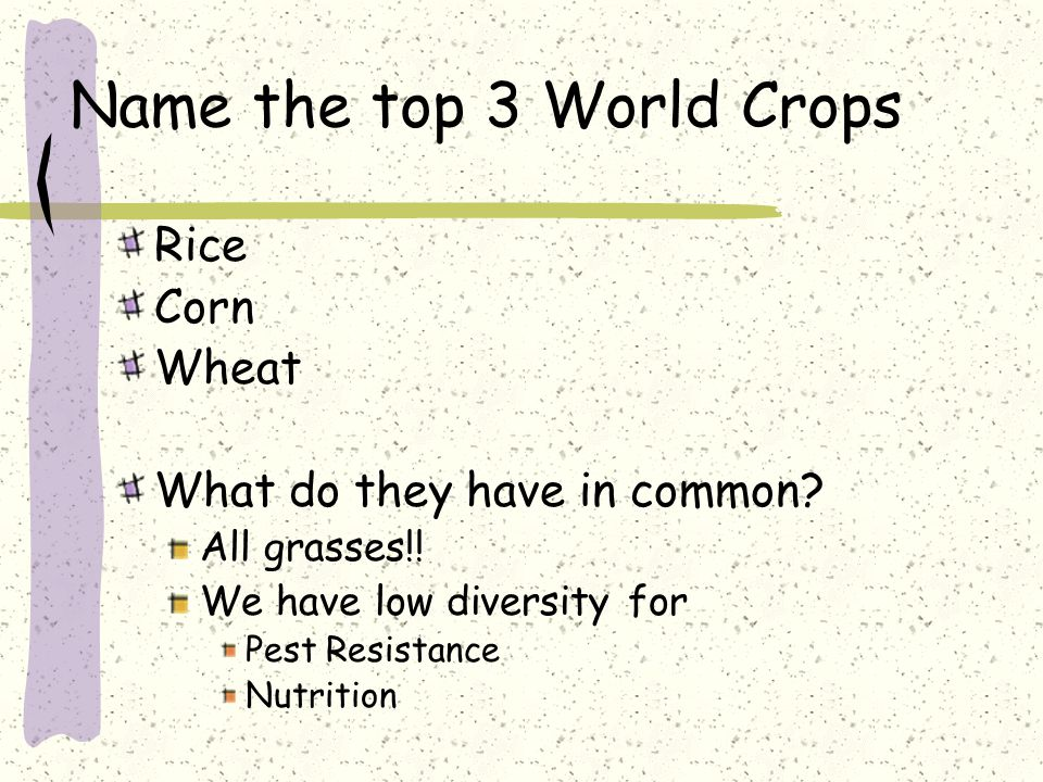 Name the top 3 World Crops Rice Corn Wheat What do they have in common.