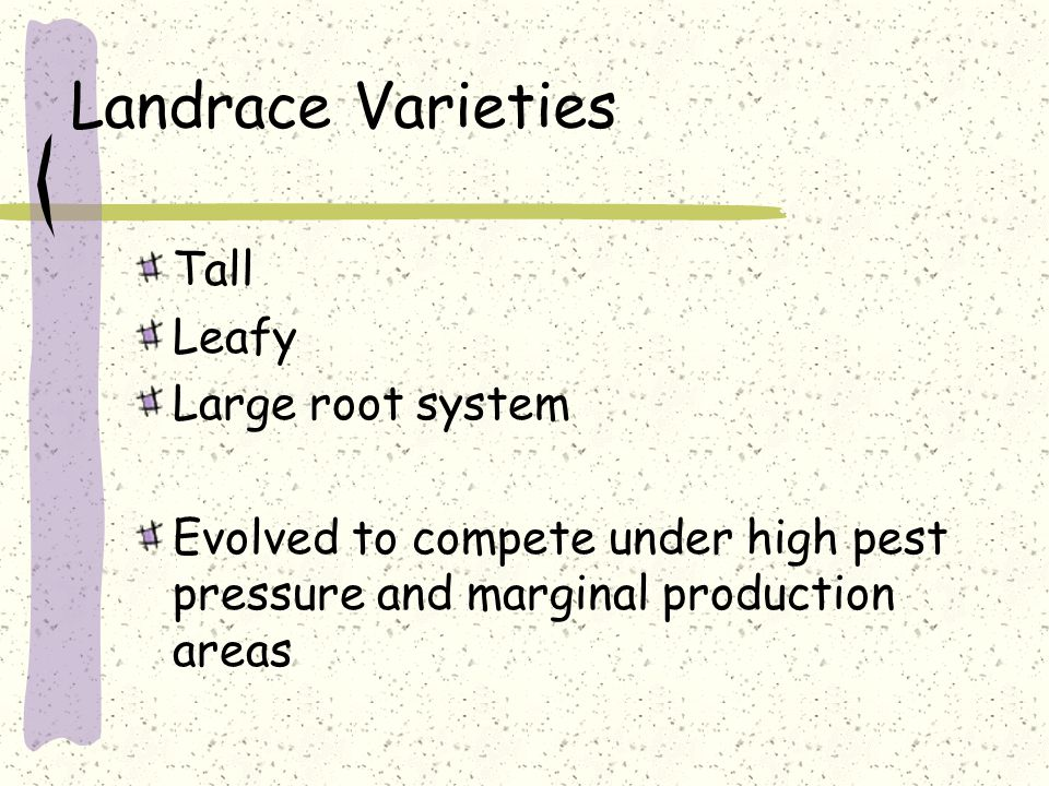 Landrace Varieties Tall Leafy Large root system Evolved to compete under high pest pressure and marginal production areas