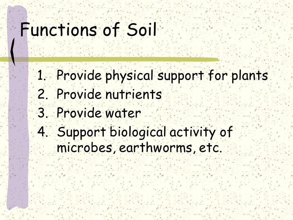 Functions of Soil 1.Provide physical support for plants 2.Provide nutrients 3.Provide water 4.Support biological activity of microbes, earthworms, etc.