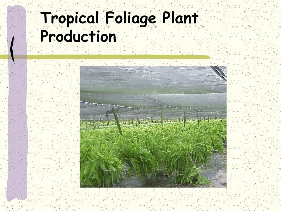 Tropical Foliage Plant Production