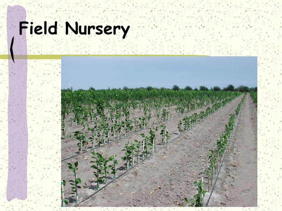 Field Nursery