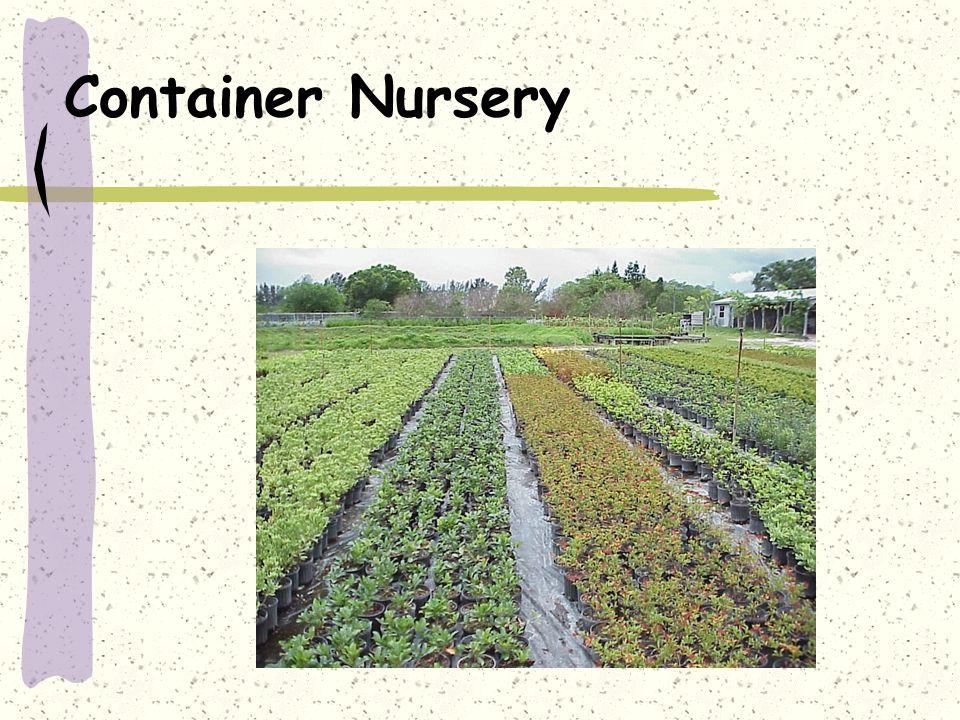 Container Nursery