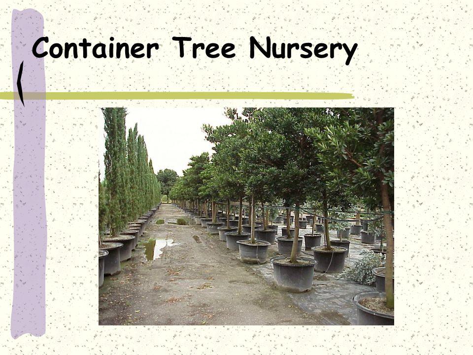 Container Tree Nursery