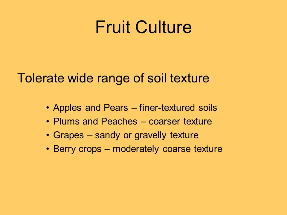 Fruit Culture Tolerate wide range of soil texture Apples and Pears – finer-textured soils Plums and Peaches – coarser texture Grapes – sandy or gravelly texture Berry crops – moderately coarse texture