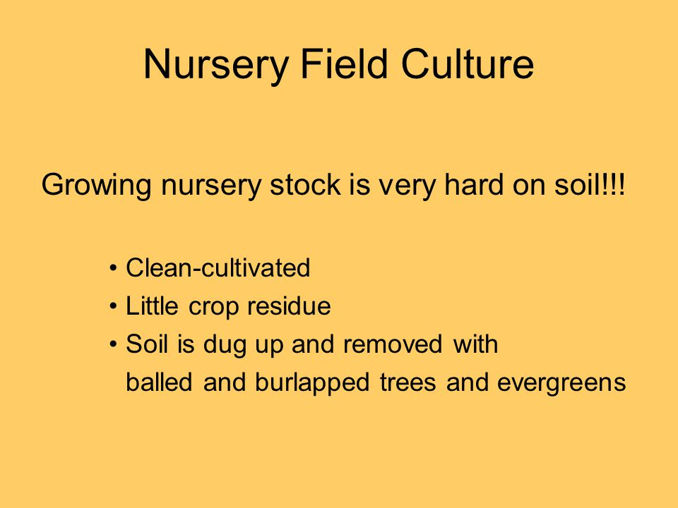 Nursery Field Culture Growing nursery stock is very hard on soil!!! Clean-cultivated Little crop residue Soil is dug up and removed with balled and bu