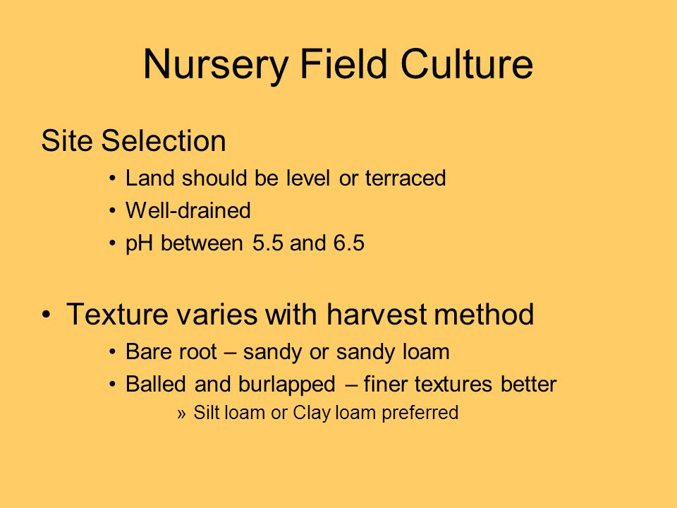 Nursery Field Culture Site Selection Land should be level or terraced Well-drained pH between 5.5 and 6.5 Texture varies with harvest method Bare root – sandy or sandy loam Balled and burlapped – finer textures better »Silt loam or Clay loam preferred
