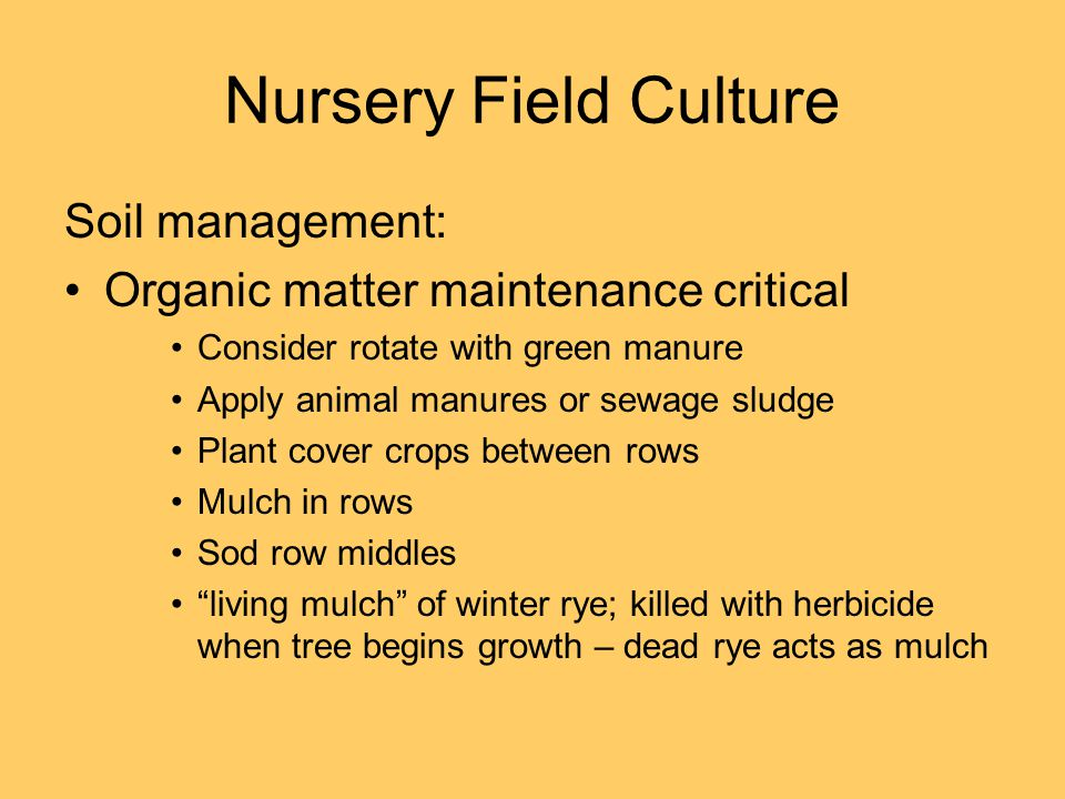 Nursery Field Culture Soil management: Organic matter maintenance critical Consider rotate with green manure Apply animal manures or sewage sludge Pla