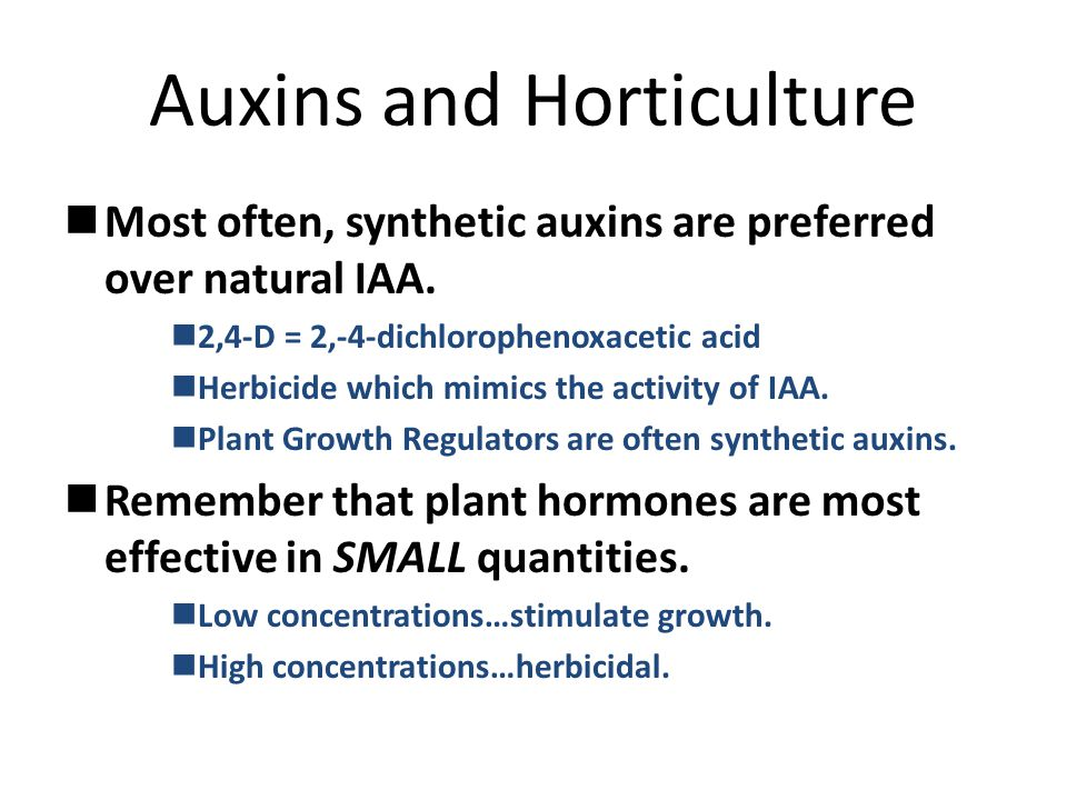 Auxins and Horticulture Most often, synthetic auxins are preferred over natural IAA.