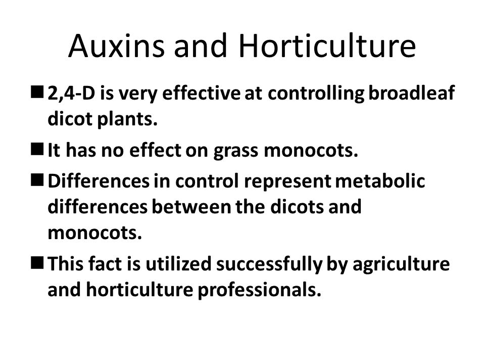 Auxins and Horticulture 2,4-D is very effective at controlling broadleaf dicot plants.