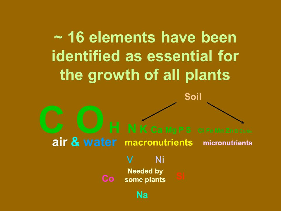 N K Ca Mg P S macronutrients micronutrients air & water Soil ~ 16 elements have been identified as essential for the growth of all plants C O H Cl Fe Mn Zn B Cu Mo Na Co Si VNi Needed by some plants