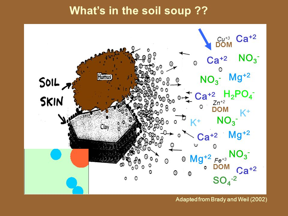 What's in the soil soup .