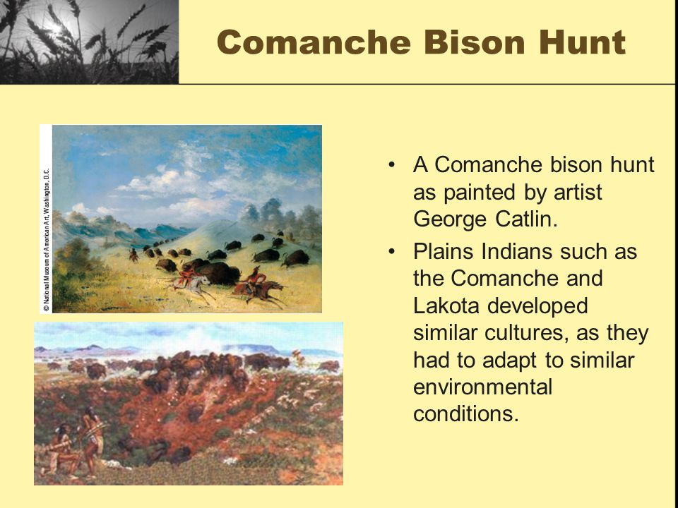 Comanche Bison Hunt A Comanche bison hunt as painted by artist George Catlin.
