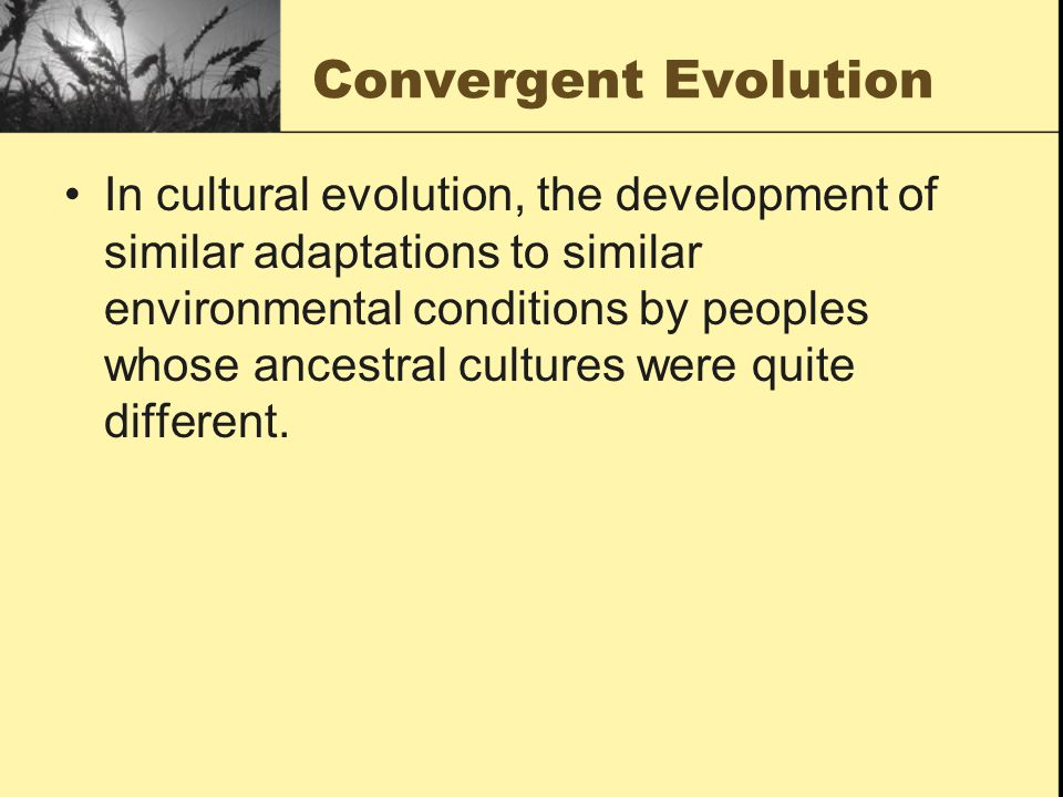 Convergent Evolution In cultural evolution, the development of similar adaptations to similar environmental conditions by peoples whose ancestral cultures were quite different.