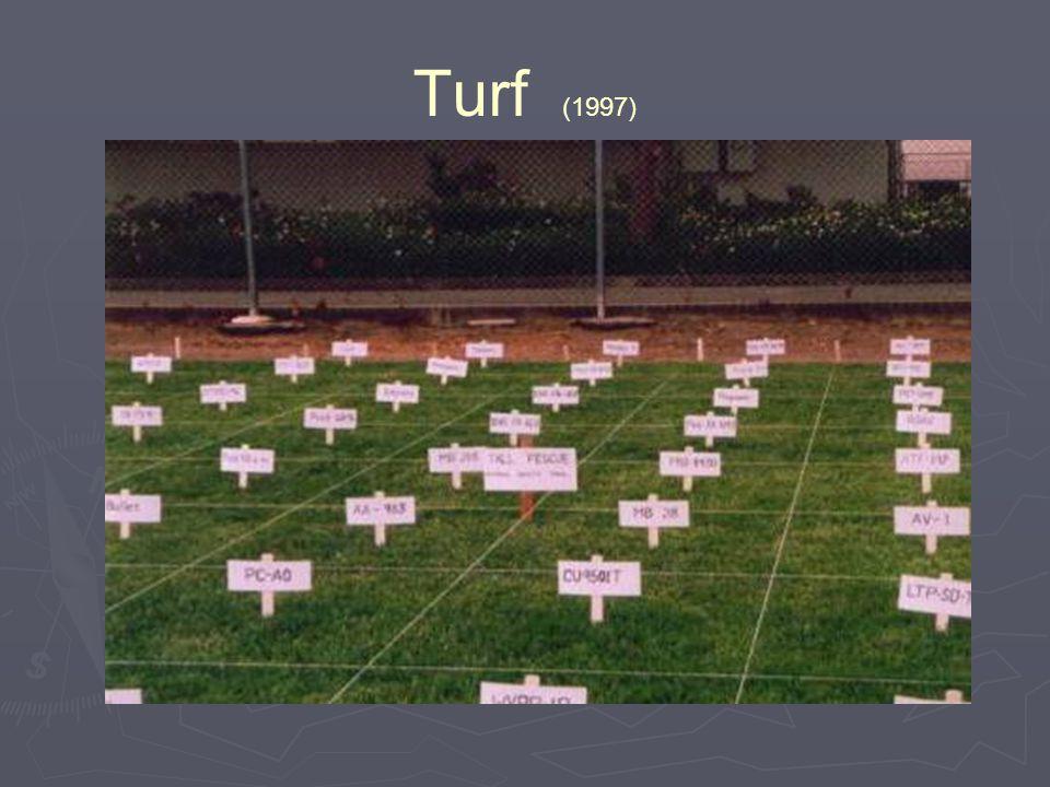 Turf (1997)
