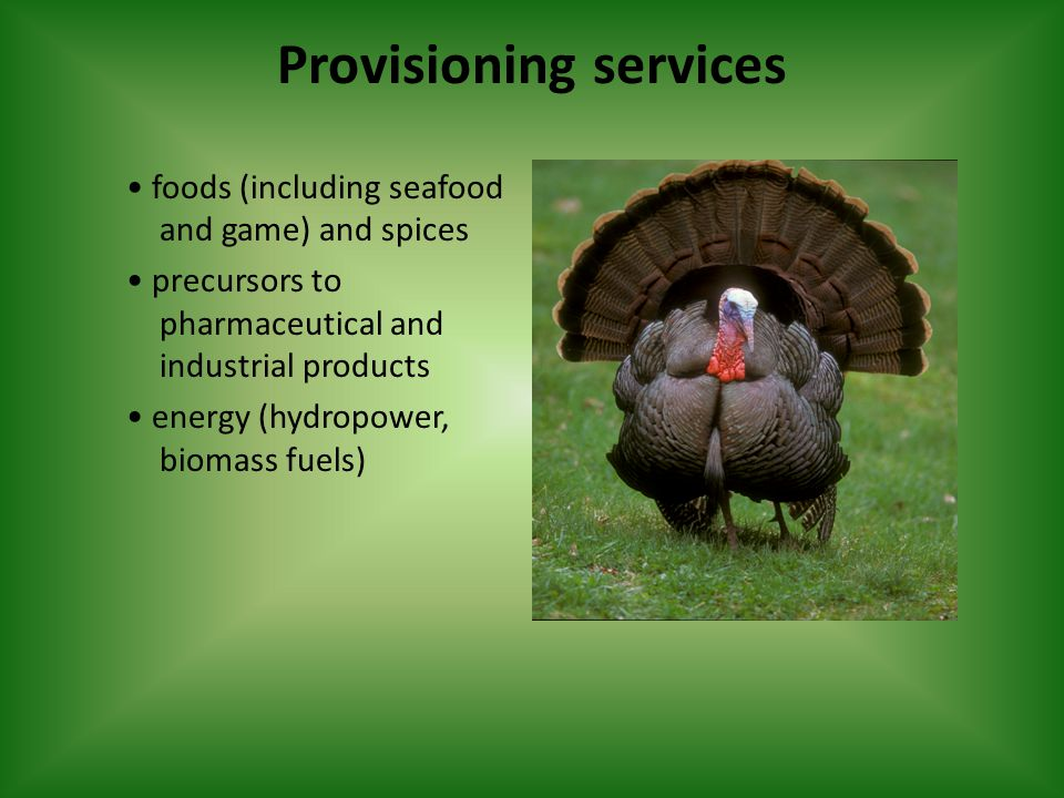 Provisioning services foods (including seafood and game) and spices precursors to pharmaceutical and industrial products energy (hydropower, biomass fuels)