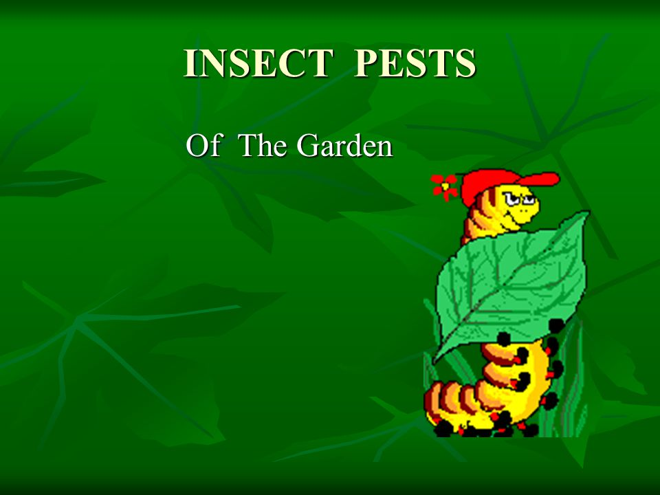 INSECT PESTS Of The Garden Of The Garden