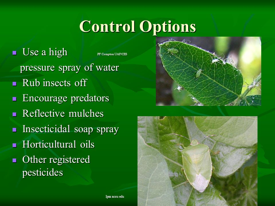 Control Options Use a high PF Compton UAF/CES Use a high PF Compton UAF/CES pressure spray of water pressure spray of water Rub insects off Rub insect