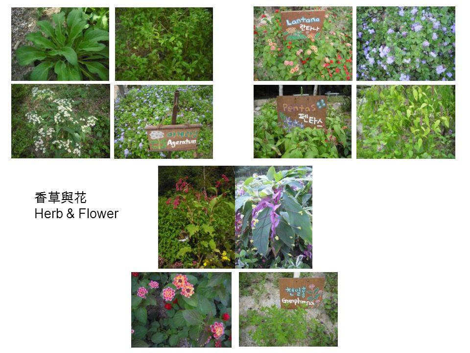 香草與花 Herb & Flower