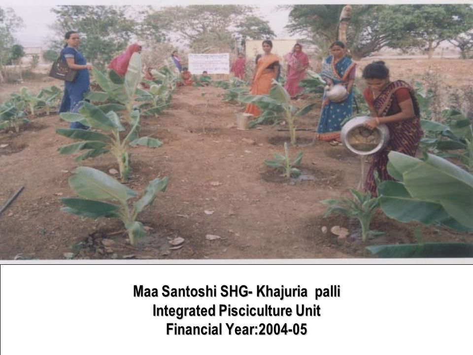 Maa Santoshi SHG- Khajuria palli Integrated Pisciculture Unit Financial Year:2004-05