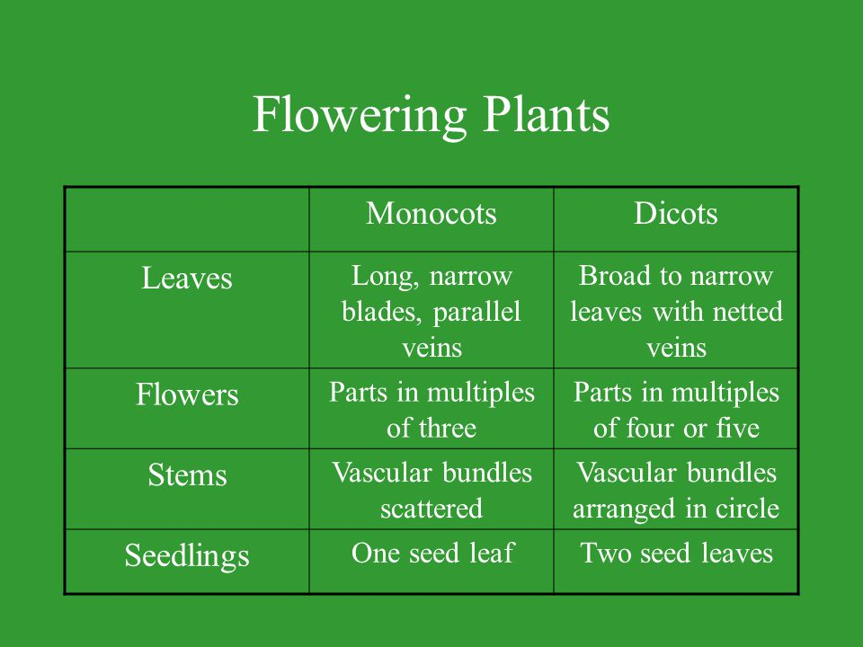 Plant Life Cycles Life Cycle –Time when a plant begins growth until the time it dies.